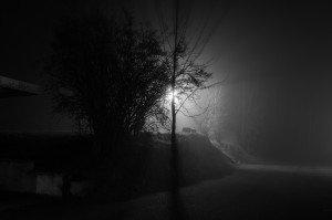 Nebel im Licht